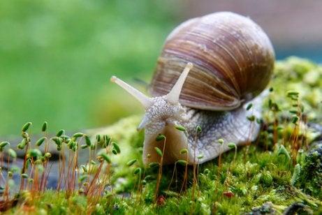 Snail crawling on moss