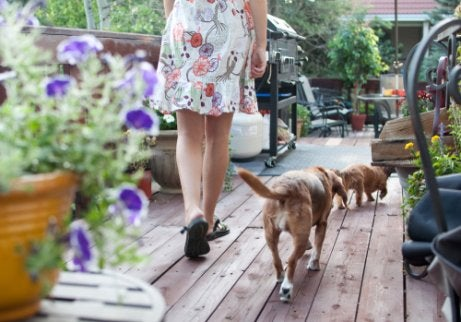 Two dogs and lady walking on deck that's full of flowers