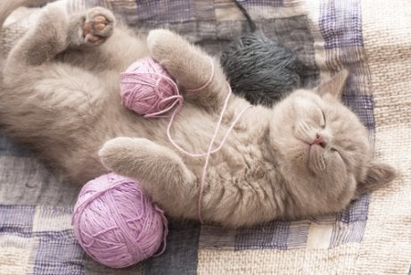 Cat purring and lying down with some yarn