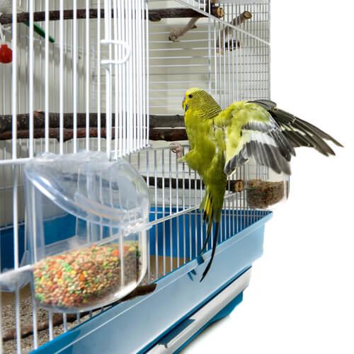 Bird climbing on its cage