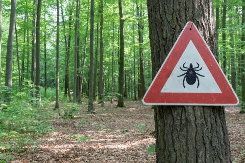 Tick warning sign in the forest