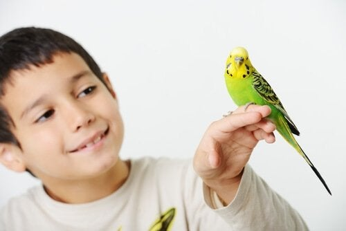 Boy with his pet bird