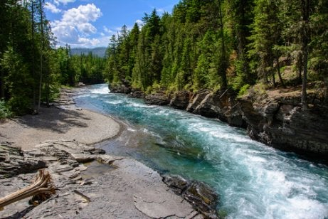 A Montana river with crystal clear water and green trees