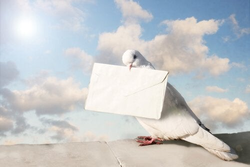 A messenger pigeon