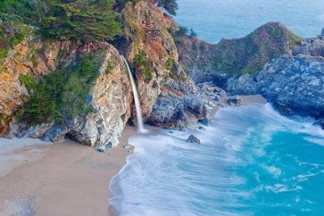 The California coast is a pet-friendly destination.