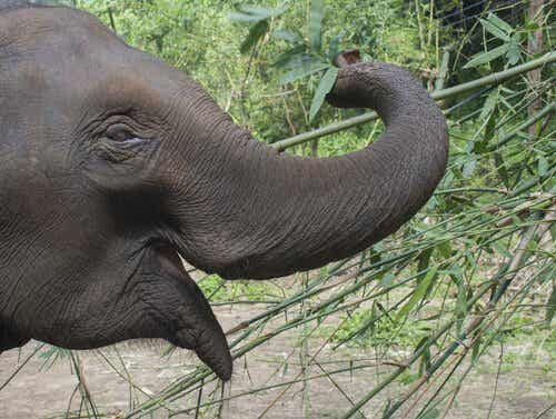 Curious Facts About Elephants