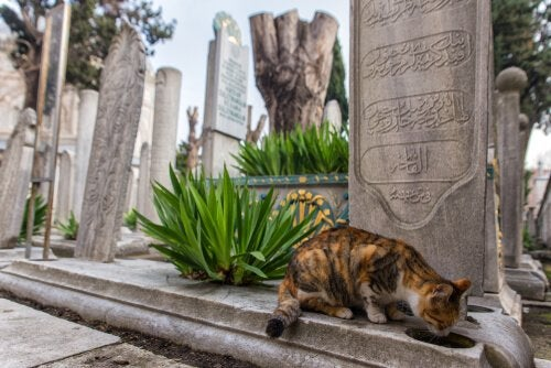 Istanbul: The City of Cats