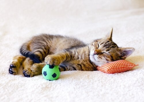 Cat lying down with ball