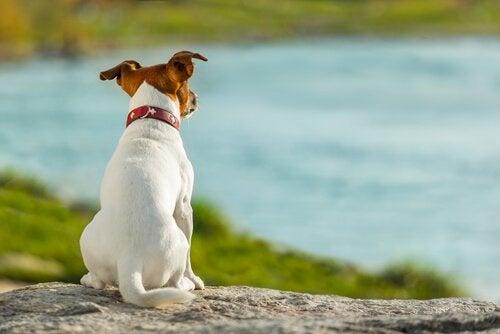 Dog looking at a lake