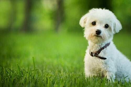 Dog standing on grass