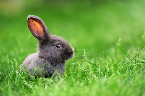 Dwarf rabbits in the grass