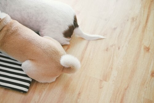 How A Dog Communicates With Their Tail