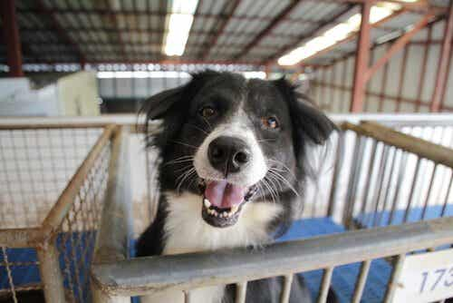 Adopting an Abandoned Dog: Things to Consider