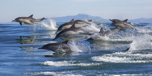 Dolphins swimming in a pod