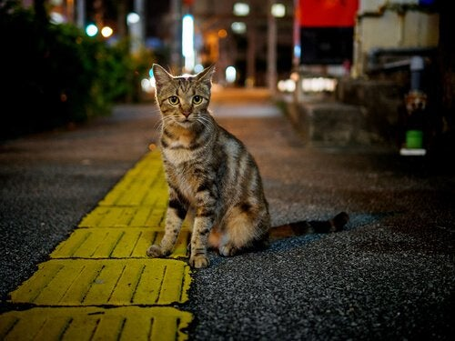 Stray cat living in a city
