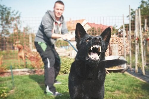 Is It True That Dogs Can Sense Fear?