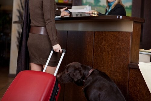 Dog sniffing luggauge