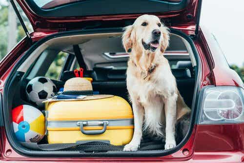 Tips For Taking Your Pet On Vacation