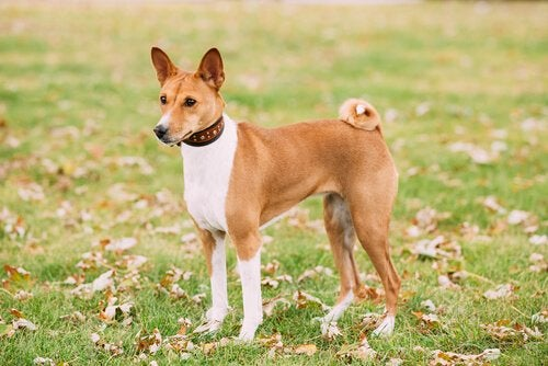 dog breeds that don't cause allergies