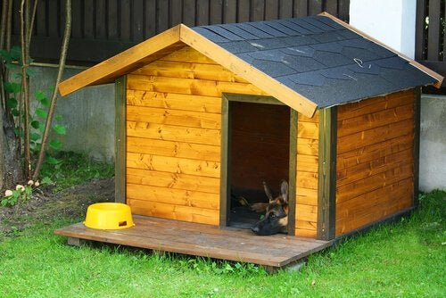 5 Tips For Decorating A Dog House
