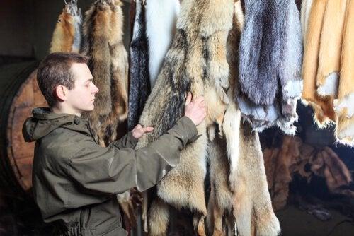 Man looking at animal hides