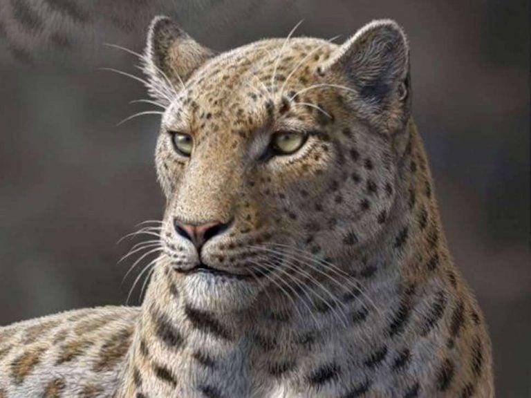 5 Extinct Wild Cats