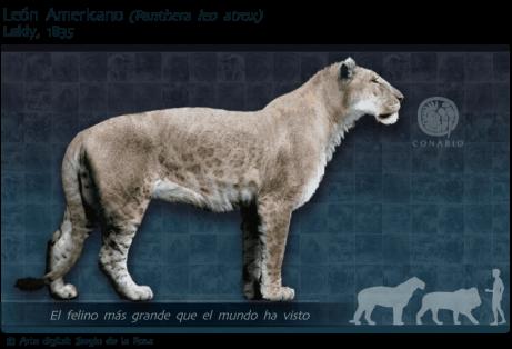 extinct wild cats