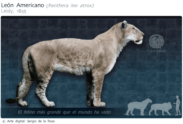 extinct wild cats