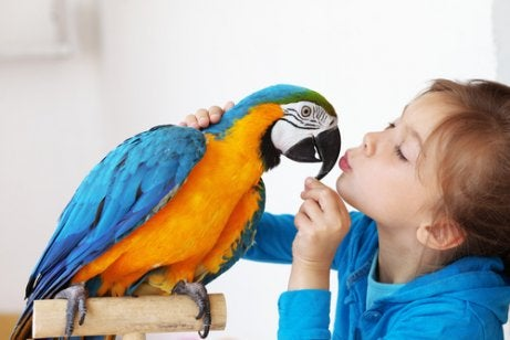 Blue and orange parrot being fed by a little girl, one of the best birds for a pet