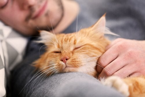 Sleeping next to your cat is good for the both of you, these two are happy