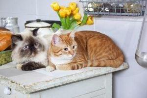Two cats on the counter in a Cat Café.