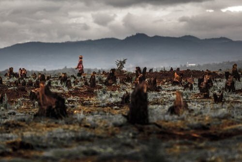 Burnt down forests for palm oil farms
