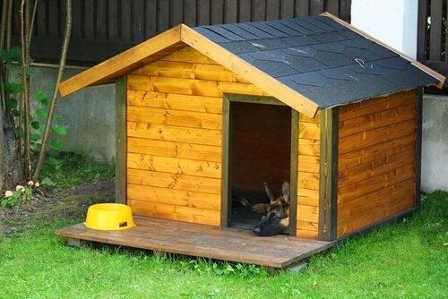 Dog house with a dog