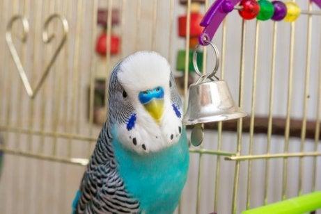 Turquoise and white parakeet