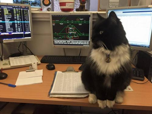 cat working at a train station