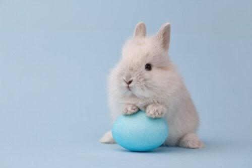 Rabbit on an Easter egg