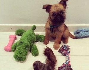 daniel sanchez arevalo's puppy
