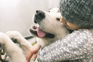 A dog's quality of life increases with the love received.