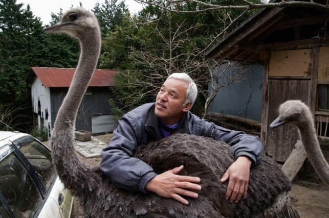 Fukushima's animal guardian petting an ostrich