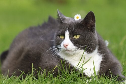 Adult cat relaxing in a field