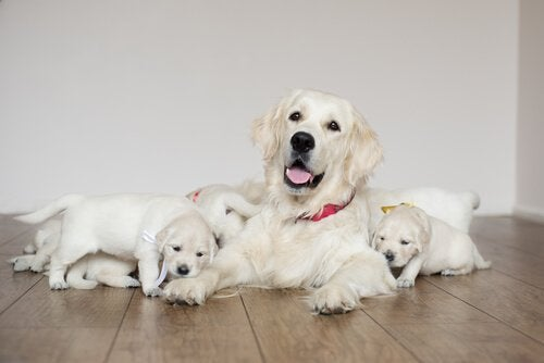 5 Tips for Your Dog's Postpartum Care