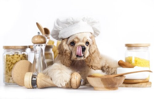 Dog with a chef cap that's about to prepare pasta