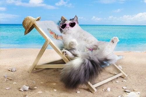 Cat sun bathing in a beach chair
