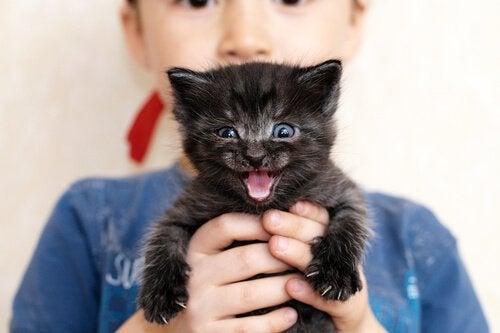 Kitten calling his parents