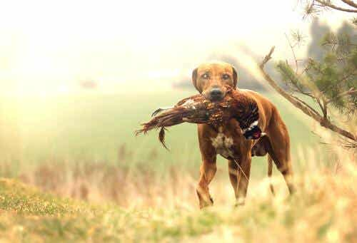 What's the Best Hunting Dog?