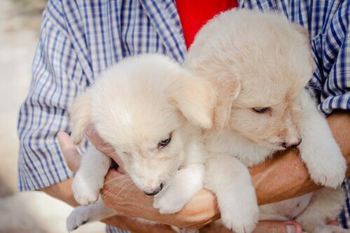 Two tan adopted dogs being held.