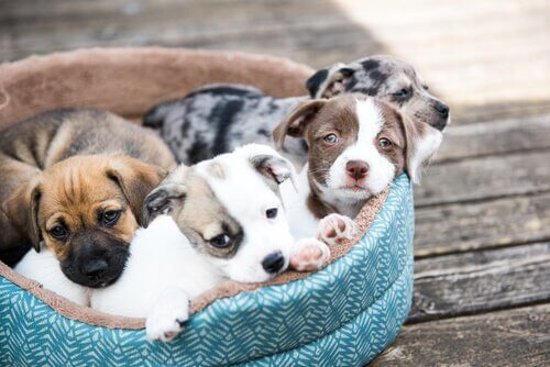 A litter of adopted dogs in a dog bed.