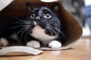 A black and white cat hiding.