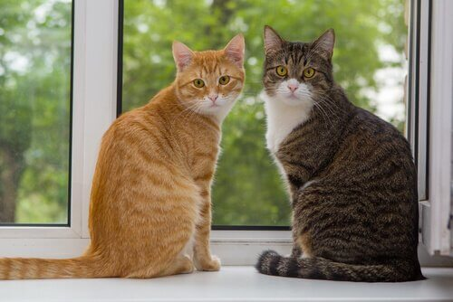 Two cats on a windowsill.