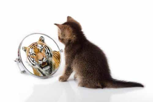 Similarities between Cats and Tigers